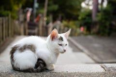 在Fushimi Inari寺庙,京都,日本的猫 免版税库存照片