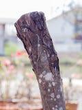 在gaden的树桩木头 库存照片