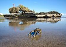 在Gangga海滩吸引力的螃蟹。巴厘岛印度尼西亚 免版税图库摄影