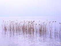 在Garda湖的芦苇 库存照片