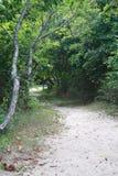 在Gardiners海湾纽约的树木繁茂的海滩足迹 库存照片