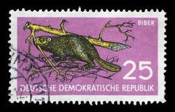 在GDR打印的邮票显示海狸,铸工纤维albicus,野生生物保护 库存图片