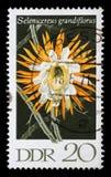 在GDR打印的邮票显示附生仙人掌Grandiflorus,开花的仙人掌厂 图库摄影
