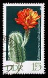 在GDR打印的邮票显示Echinocereus salmdyckianus,开花的仙人掌厂 库存照片