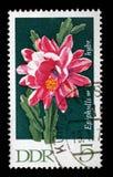 在GDR打印的邮票显示Epiphyllum,开花的仙人掌厂 库存照片