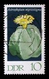 在GDR打印的邮票显示Hamatocactus setispinus,开花的仙人掌厂 免版税库存照片
