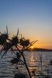 在Gialova盐水湖, Messinia,希腊的日落 图库摄影