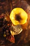 在goldish autunm秋天颜色的柑橘果子 免版税库存照片