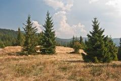 在Gorce山的Bukowina Wakzmundzka小山 免版税库存图片