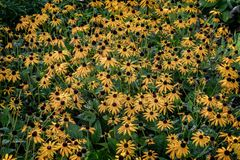 在Graasten的花防御皇家丹麦的夏天住所 图库摄影