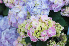 在graden的五颜六色的花 免版税库存照片