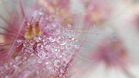 在grassflower的dewsdrop 免版税库存照片