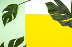在gree和黄色的热带叶子 免版税库存照片