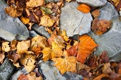 在groung的叶子 图库摄影