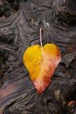 在groved,被风化的日志的叶子 库存照片