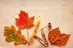 在grunge背景的不同的秋叶 库存图片