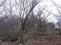 在Grza附近的老森林 免版税库存照片