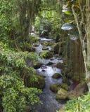 在Gunung Kawi寺庙附近的河在巴厘岛印度尼西亚 免版税库存照片