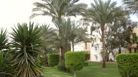 在h的美丽的绿色植被和棕榈树 影视素材