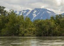 在Haines,阿拉斯加附近的自然秀丽 免版税库存照片