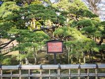 在Hamarikyu庭院的300年杉木在东京,日本 免版税库存图片
