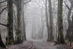 在Hampstead荒地的有薄雾的早晨,伦敦 免版税库存照片
