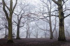 在Hampstead荒地的有薄雾的早晨,伦敦 免版税图库摄影