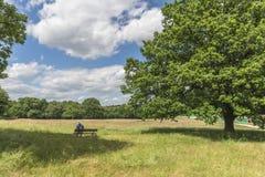 在Hampstead荒地,伦敦,英国的议会小山 库存图片