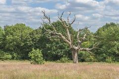 在Hampstead荒地,伦敦,英国的议会小山 免版税库存图片