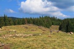 在Harghita山的风景 免版税库存照片