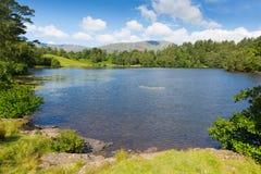 在Hawkshead湖区国家公园英国英国附近的塔恩省方法在一个美好的晴朗的夏日 图库摄影