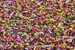 在HDR高力学范围的五颜六色的秋叶背景 免版税库存图片
