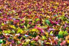 在HDR高力学范围的五颜六色的秋叶背景 库存照片