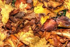 在HDR高力学范围的五颜六色的秋叶背景 免版税库存照片