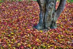 在HDR高力学范围的美好的秋叶背景 免版税库存图片