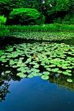 令人敬畏的日本禅宗庭院磅在京都 库存照片