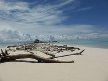 在Helens礁石密克罗尼西亚的漂流木头 库存照片