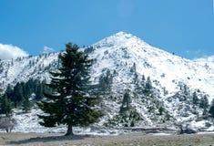 在Helmos山的冬天风景 希腊 免版税库存图片