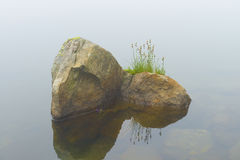 在hemkunt湖放牧在岩质岛上的花 免版税库存照片