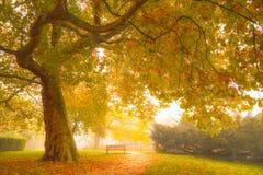 在het Plantsoen的秋天 库存图片