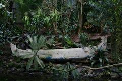 在het regen woud的Oude卡诺 库存图片