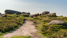 在Higger突岩,南约克郡,英国,英国顶部的母牛 免版税库存图片
