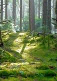 在Hobbit足迹的森林幽谷 免版税库存图片