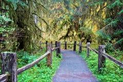 在Hoh雨林的供徒步旅行的小道 免版税库存照片