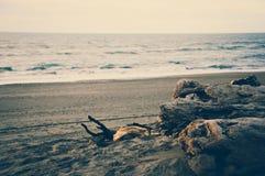 在Hokitika黑色沙子海滩的日落与与葡萄酒颜色作用的死的木日志 免版税图库摄影
