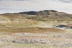 在Holmsland Klit的沙丘在丹麦 免版税图库摄影
