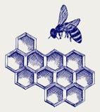 在honeycells的工作的蜂 库存照片