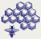 在honeycells的工作的蜂 库存图片