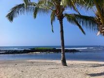 在Honokohau港口海滩的棕榈树在大岛夏威夷 免版税库存照片