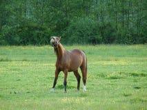 在horsing附近 免版税库存照片